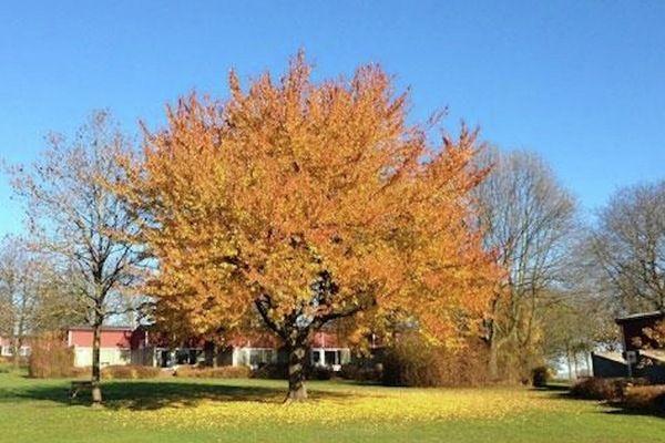 Walem Schin op Geul Limburg Netherlands