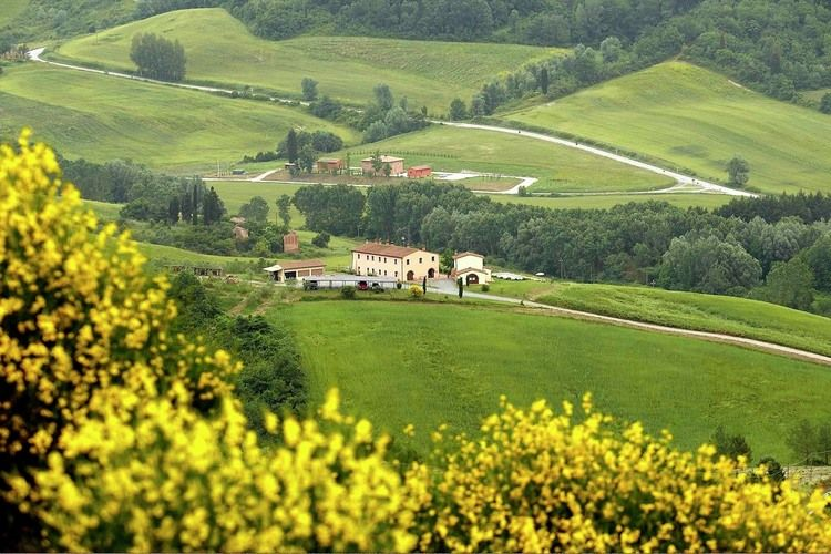 Olivi della Collina Palaia Tuscany Elba Italy