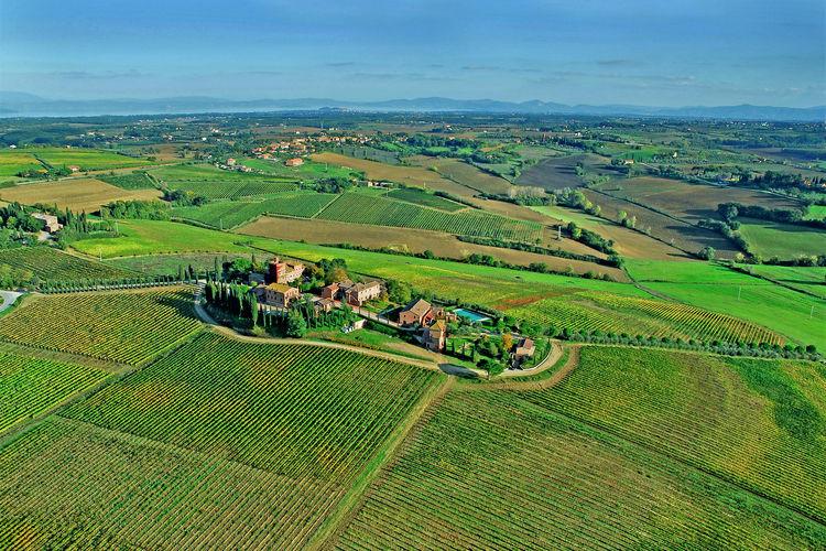 Primula  Tuscany Elba Italy