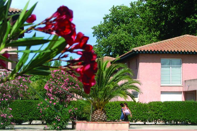 Pierres de Jade Saint-Cyprien Languedoc-Roussillon France