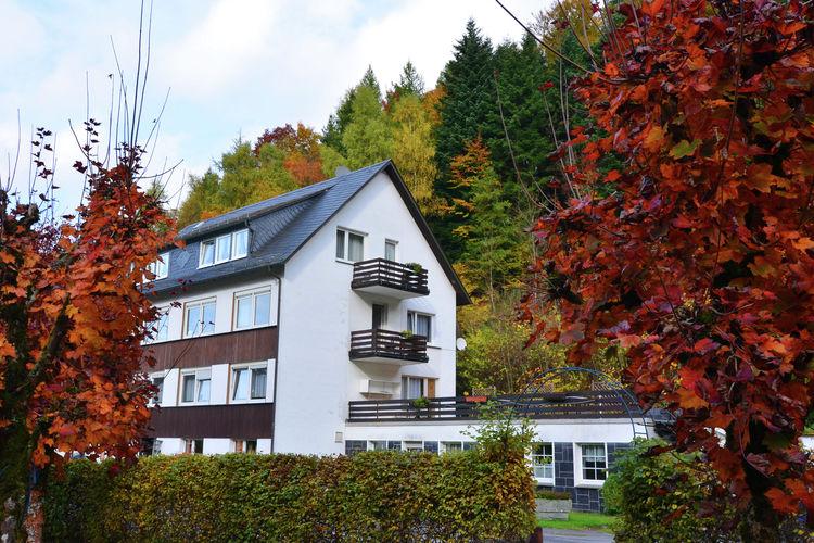 Der kleine Dachs 2 Schmallenberg Sauerland Germany